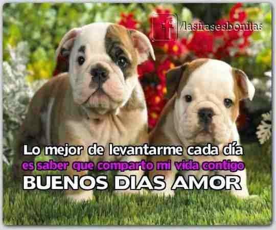 Imagenes De Buenos Dias Frases De Amor De Buenos Dias Mensajes De