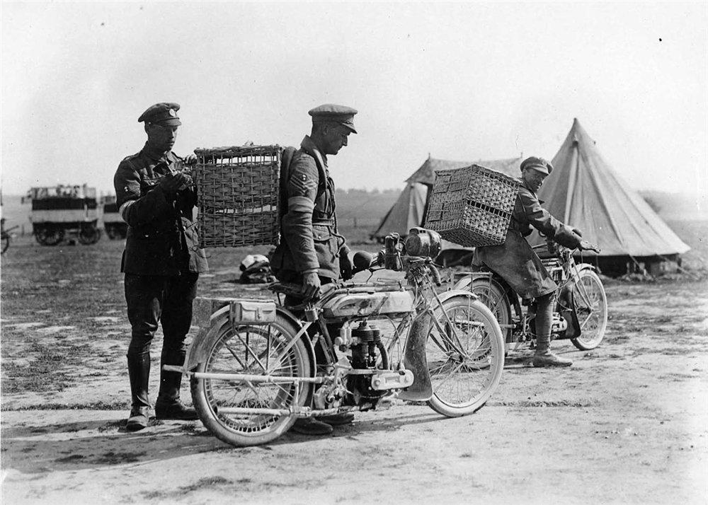 Связисты голубиной почты Первой мировой