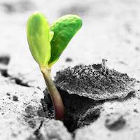 Kuvassa uusi kasvi tulee läpi kuivasta maasta.