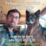 Peluqueria Canina Lujos Mascotas Quilpue