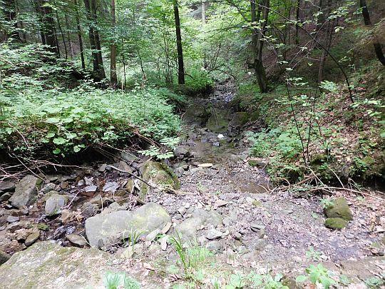 Potok wypływający z Czarnego Lasu.