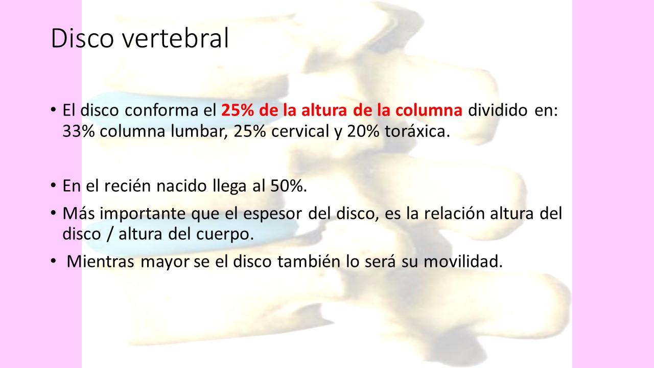 Anatomía de la Columna | DRA. MAIRA ESFRE