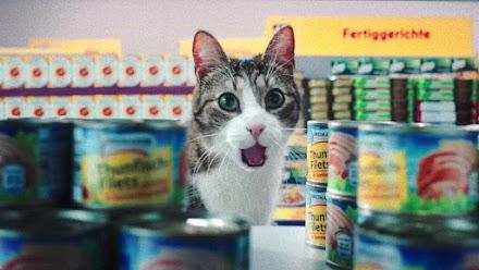 Hast Du schon mal Katzen einkaufen gesehen? Netto-Katzen halt