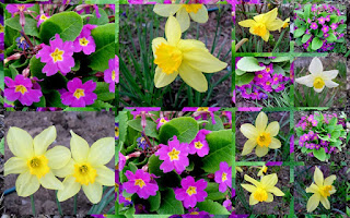 yellow and magenta flowers
