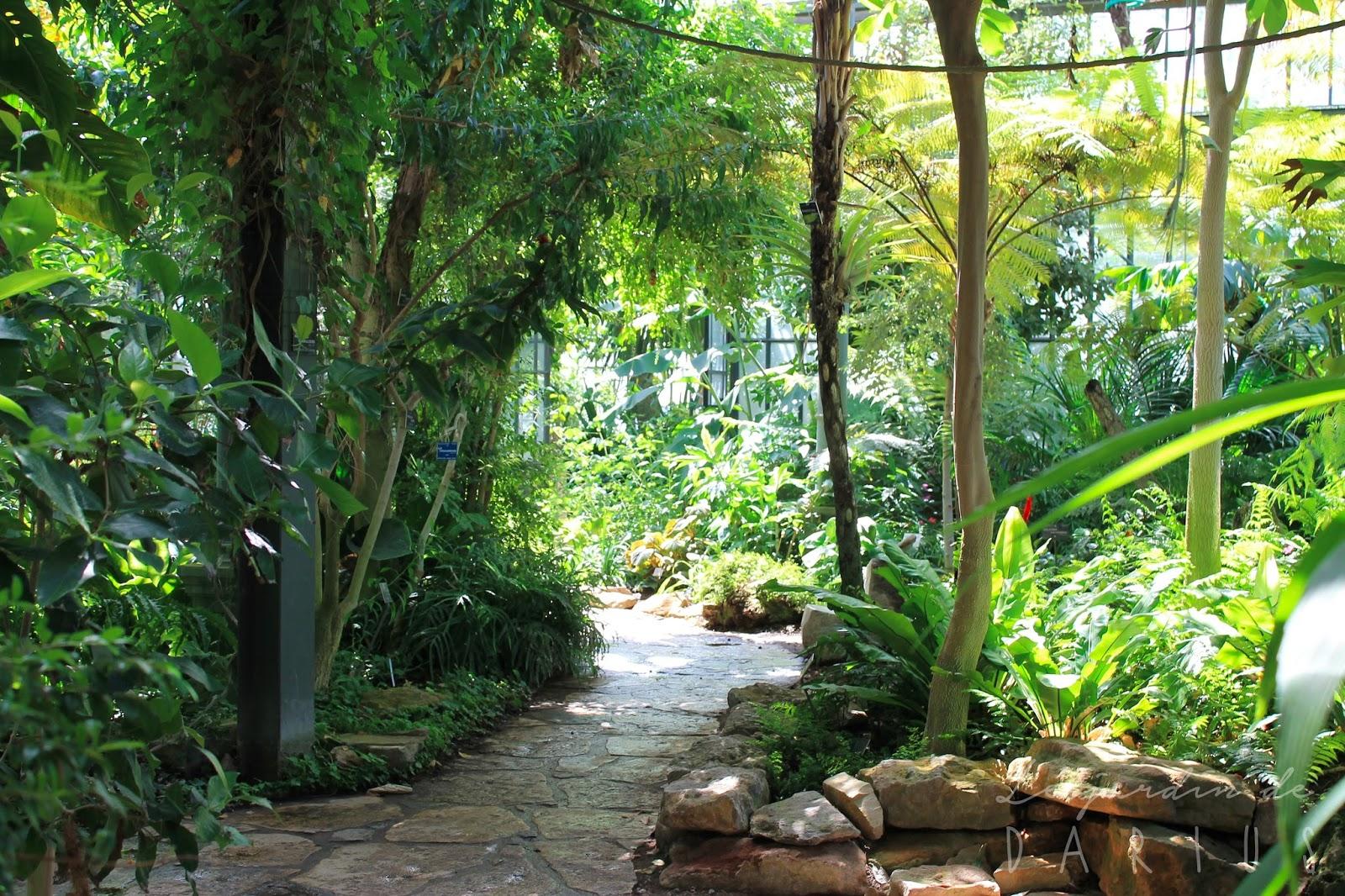 le jardin de darius jardin botanique de lyon parc de la t te d 39 or. Black Bedroom Furniture Sets. Home Design Ideas