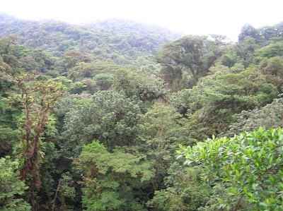 Bosque lluvioso, Monteverde, Costa Rica, vuelta al mundo, round the world, La vuelta al mundo de Asun y Ricardo, mundoporlibre.com