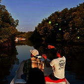 Hunting FireFly at Mangrove Bintan