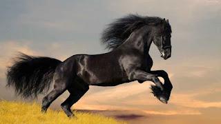 Soñar con caballo negro