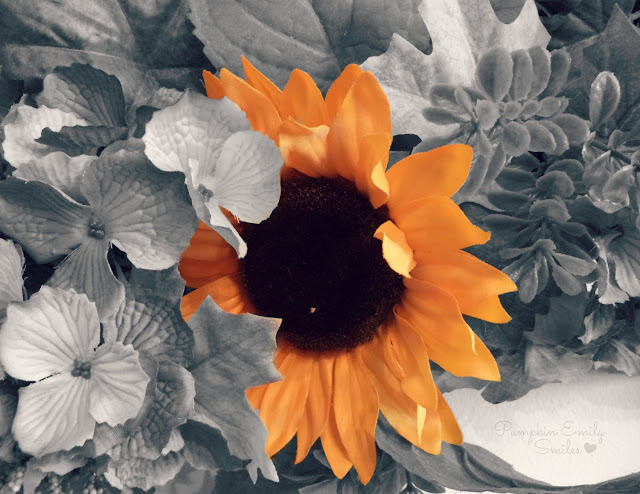 A black and white picture and a yellow sunflower