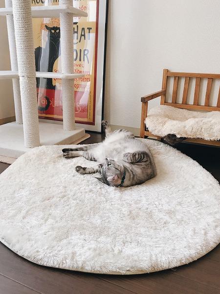 ラグの上に仰向けで寝っ転がっているサバトラ猫