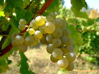 blog vin Beaux-Vins vins Sauvignon Blanc Sancerre