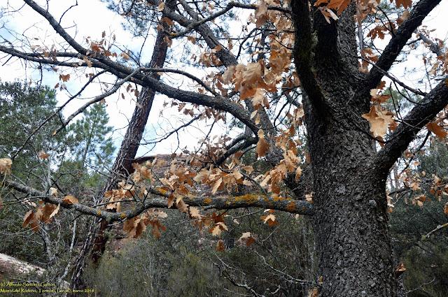 tormon-flora-monte-rodeno-melojo
