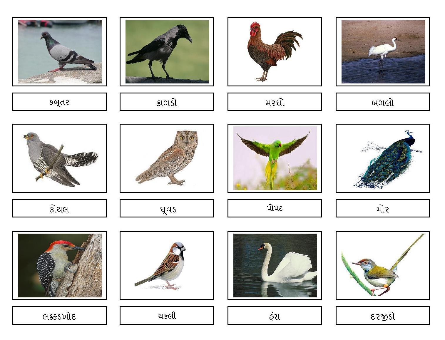 All Birds Name In Hindi With Pictures