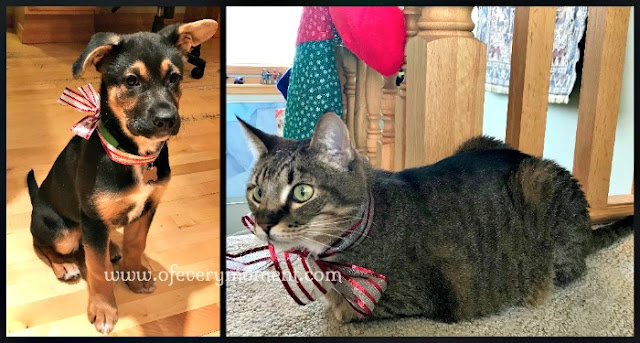 Dog and cat with Christmas ribbons