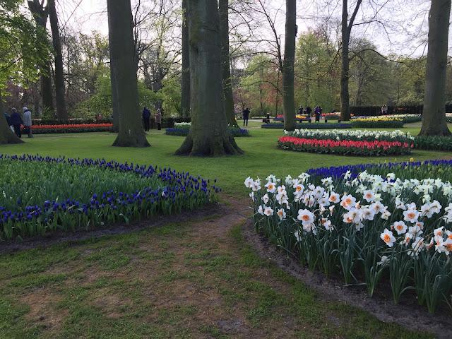 Lisse- Holanda