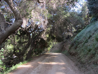 Heading north on Oak Canyon Trail, Griffith Park