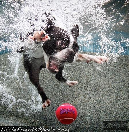Pet Photography by Seth Casteel