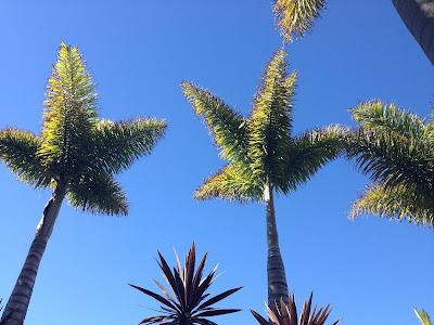 Palms, Tropical, Sun, Poolday, Heaven