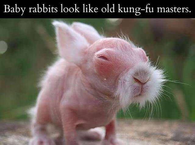 Baby rabbits look like old kung-fu masters