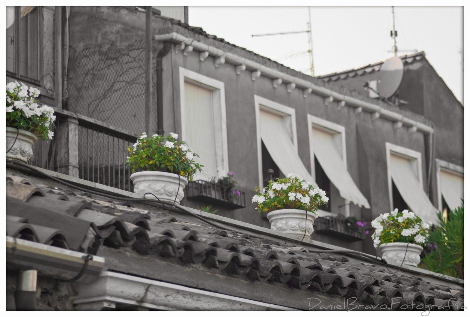 Venecia, Venezia, edificio en blanco y negro con flores en color.