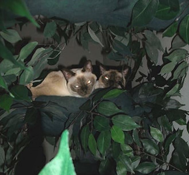 Wood Cat Tree