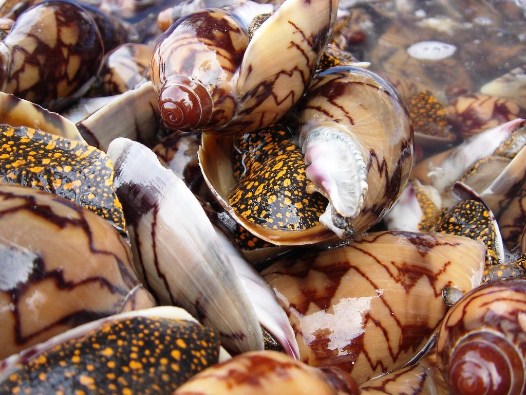 Kinh nghiệm ăn hải sản khi đi phượt ở Nha Trang