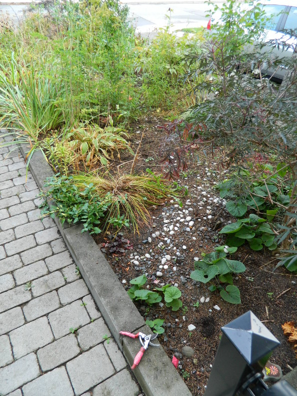 Garden Muses Not Another Toronto Gardening Blog Front And