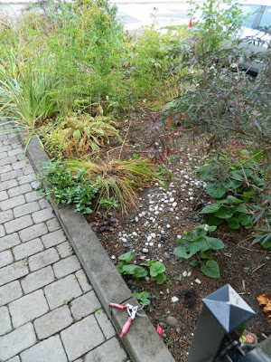 Toronto Fall Clean up Bedford Park Front Garden before by Paul Jung Gardening Services