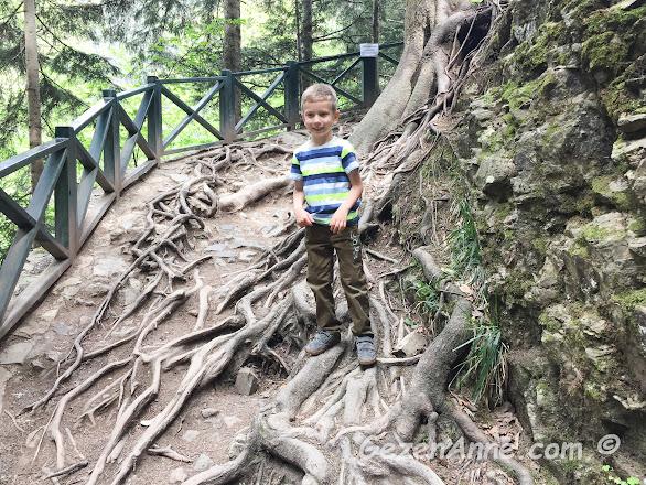 Sümela yolunda ilginç ağaç kökleri ile kaplı dağ yolu, Maçka Trabzon