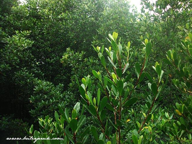 Mangrove Center Graha Indah Balikpapan
