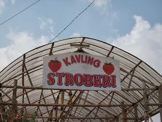Kavling Strawberry Cihideung Lembang Bandung