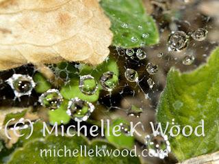 Raindrops in a garden web