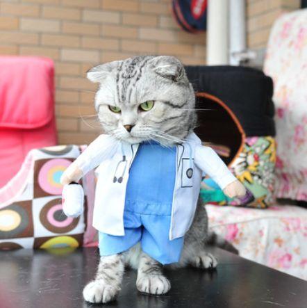Beautiful Cute Cat in Doctor's Costume