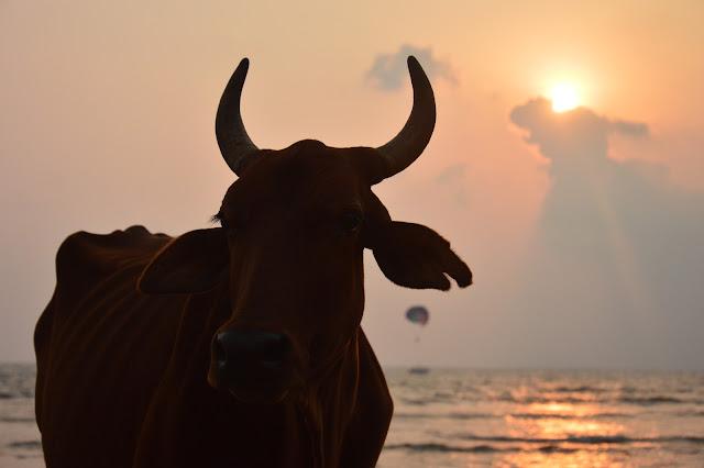 Coucher de soleil a Goa