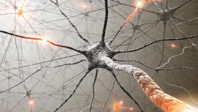 """Pesquisadores descobriram células """"zumbis"""" que contribuem para a degeneração cognitiva"""