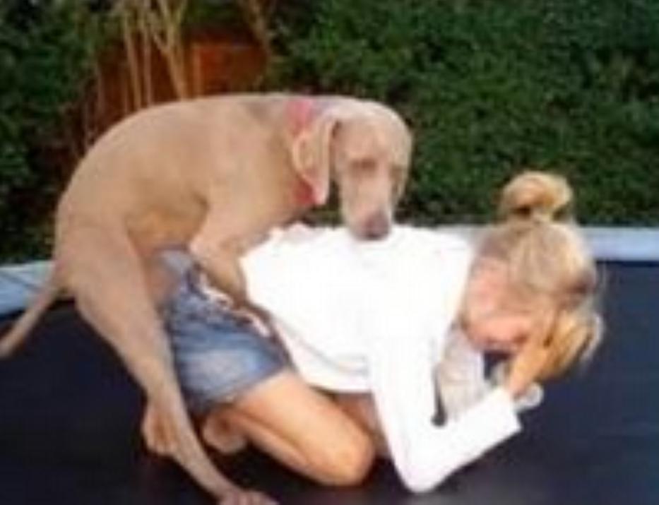 Hund Fikt Frau