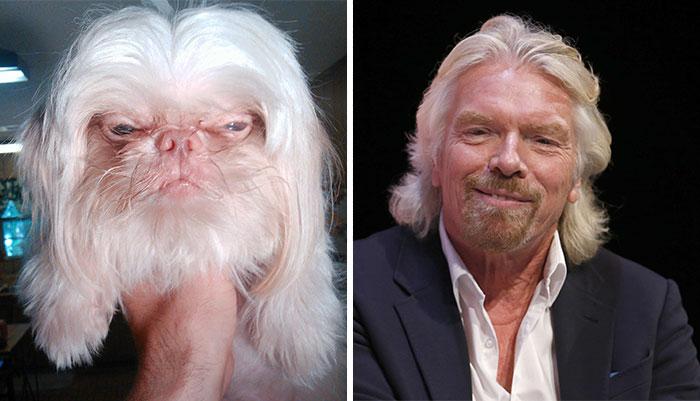 Um cão que parece Richard Branson