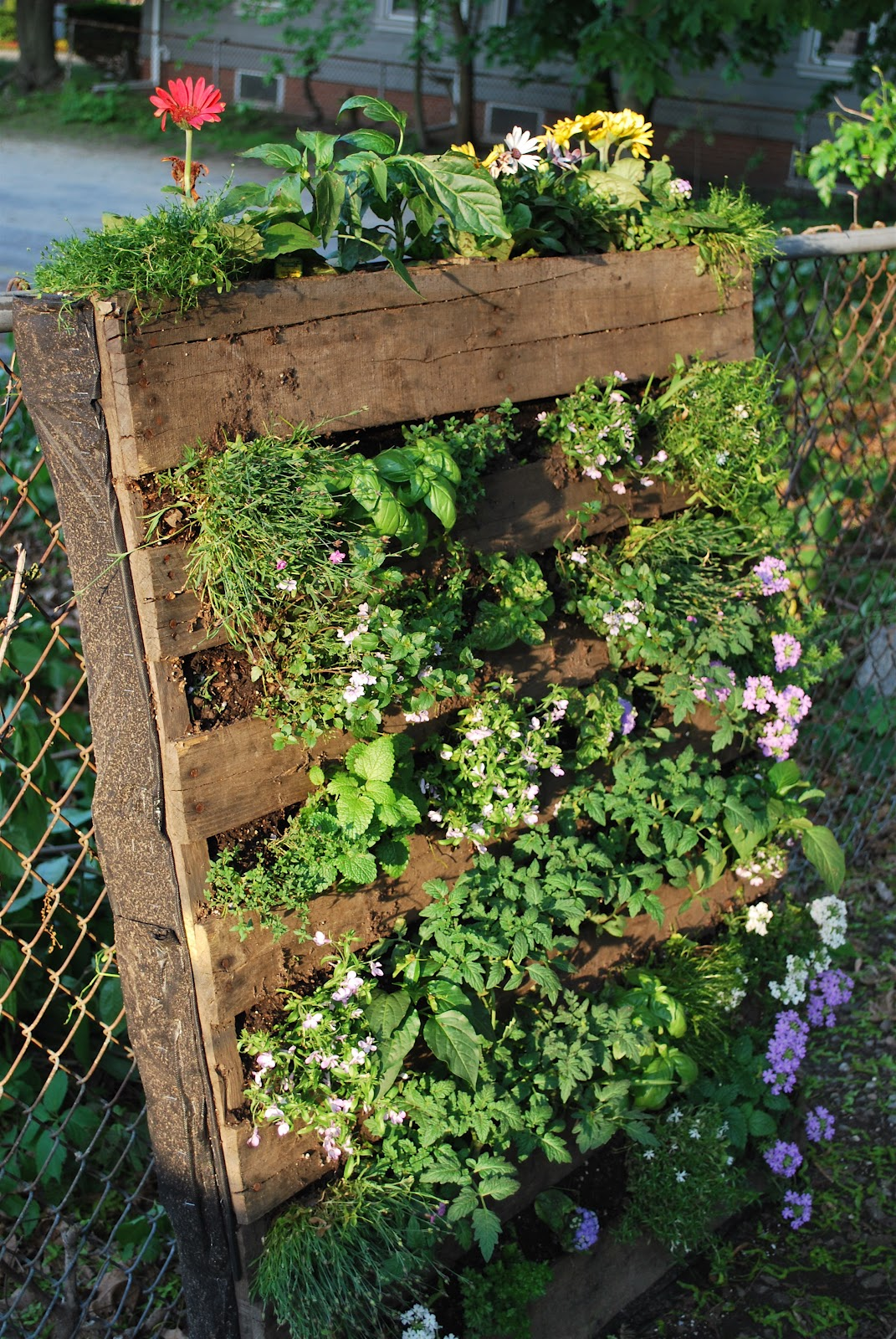 Ramblings of a Rumbly Girl: Pallet Garden