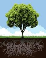 17 elementos químicos necessários para o desenvolvimento dos vegetais