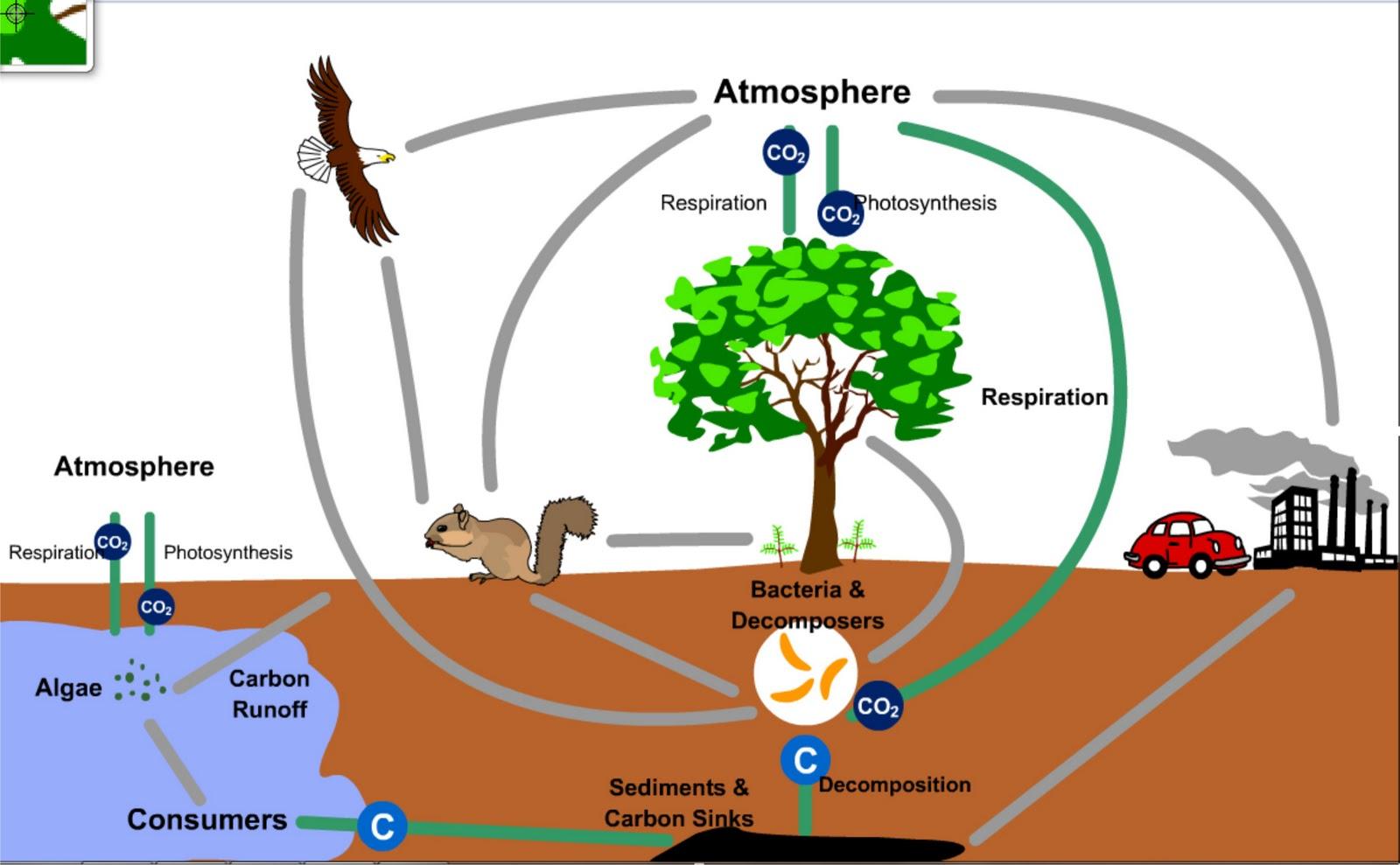 Carbon Cycle Swf Siklus Karbon Swf