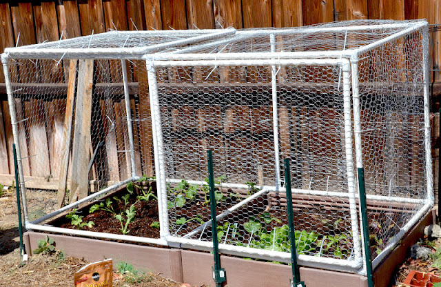 G Rated Square Foot Garden Amp Hinged Door Cage