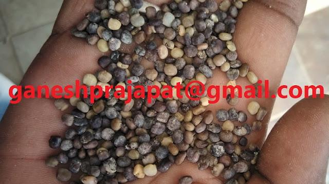 "ग्वार की कीमतों में उपज की आवक के मुख्य समय के बावजूद उछाल    Guar, guar gum, Guar gum price, Guar gum export,  guar gum news, NCDEX guar gum price, Guar gum report, guar seed production, guar gum consultant, guar seed export, guar gum export from india 2017-2018 , guar, guar gum, guar gum news, Guar gum export-2017-2018, Guar gum export-from India during 2017-2018, Guar gum export data -2017-2018, Guar gum rate , NCDEX guar gum price,  guar gum export-2017, guar gum export-2018, guar gum demand-2017, guar gum demand-2018, guar gum production, guar gum cultivation, guar gum cultivation consultancy, Guar, guar gum, guar price, guar gum price, guar demand, guar gum demand guar seed production, guar seed stock, guar seed consumption, guar gum cultivation, guar gum cultivation in india, Guar gum farming, guar gum export from india, Fundamentally Guar seed and guar gum are very strong , Guar, guar gum, guar price, guar gum price, guar demand, guar gum demand, guar seed production, guar seed stock, guar seed consumption, guar gum cultivation, guar gum cultivation in india, Guar gum farming, guar gum export from india , guar seed export, guar gum export, guar gum farming, guar gum cultivation consultancy, today guar price, today guar gum price, ग्वार, ग्वार गम, ग्वार मांग, ग्वार गम निर्यात 2018-2019, ग्वार गम निर्यात -2019, ग्वार उत्पादन, ग्वार कीमत, ग्वार गम मांग, guar seed, Guar Gum   Guarkernmehl, Guarkernmehl (Guar Samen) Anbau-Beratung in Deutschland, Guarkernmehl Samen (Cyamopsis tetragonoloba) Anbau / Landwirtschaft / Agrarwirtschaft Beratung in Deutschland, guat bhav in future, Gum seed production, Guma guar, Guma guar (nasiona Guar) uprawy Consultancy Polska,Türkiye ye Guar sakız (Guar tohum) tarım danışmanlığı, What does "" Crude Going Down "" means?, which rose for a third consecutive week ??, Why Guar seed and Guar Gum is going up ? Is it real of speculative ? Guar seed, Will Guar seed and Guar Gum prices, Will Guar seed and Guar gum prices improve with Global Cr"
