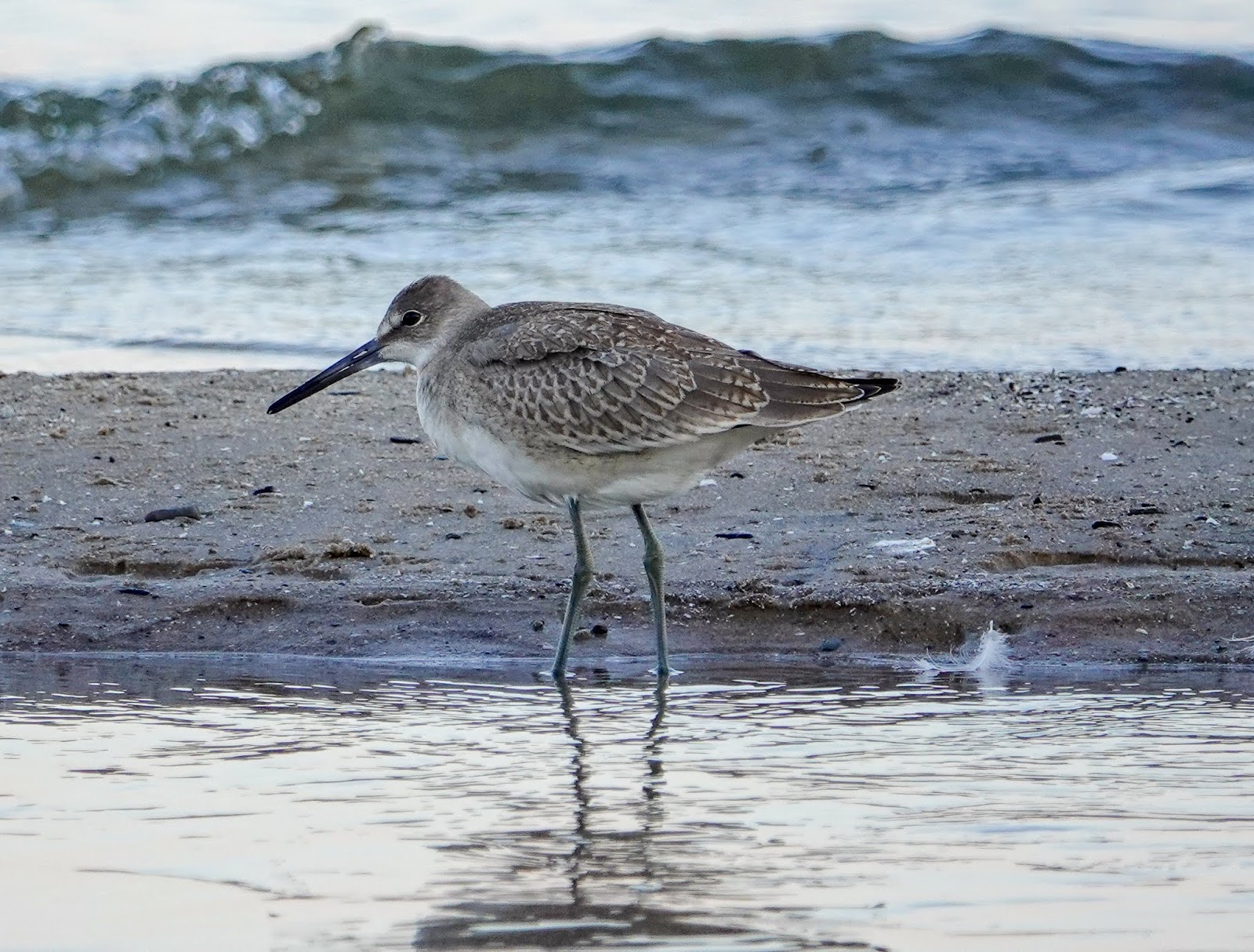 Gale S Photo And Birding Blog