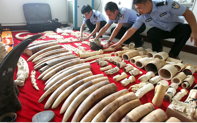 Police arrest 'kingpin' of Asia's biggest wildlife smuggling syndicate