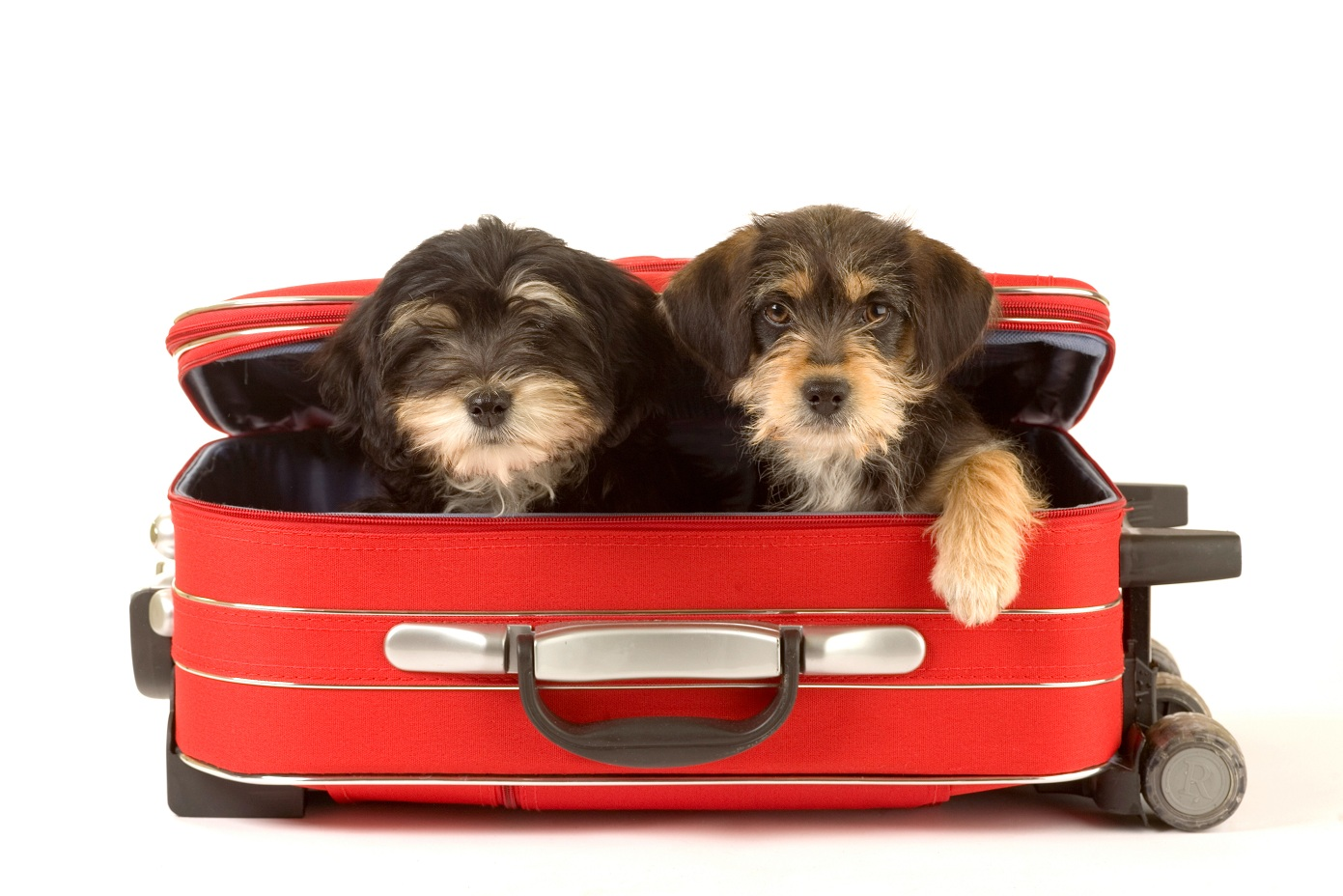 Bishop Ranch Veterinary Center: Pet Hotels: Traveling with ...