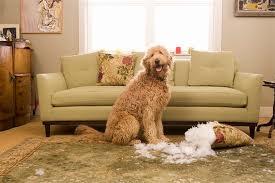 treinamento de cães
