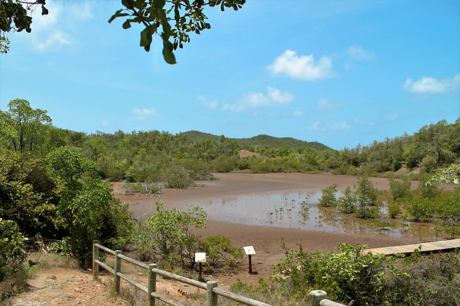 martinique île presqu'île caravelle chateau dubuc soleil vacances 972 mangrove randonnée