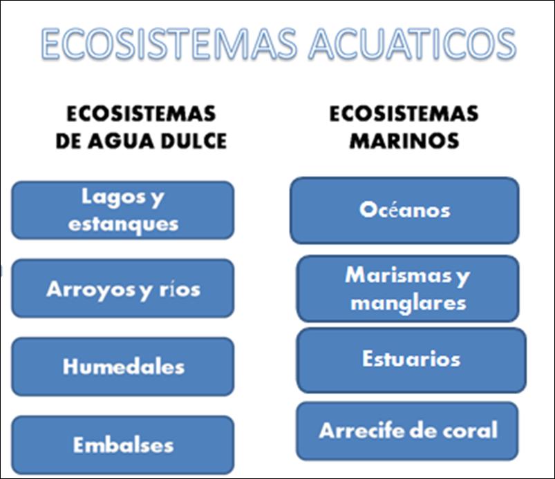 Ecosistemas Acuaticos 1 2 Clasificación De Los Ecosistemas Acuaticos