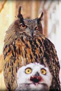 Funny owl images |Funny Animal