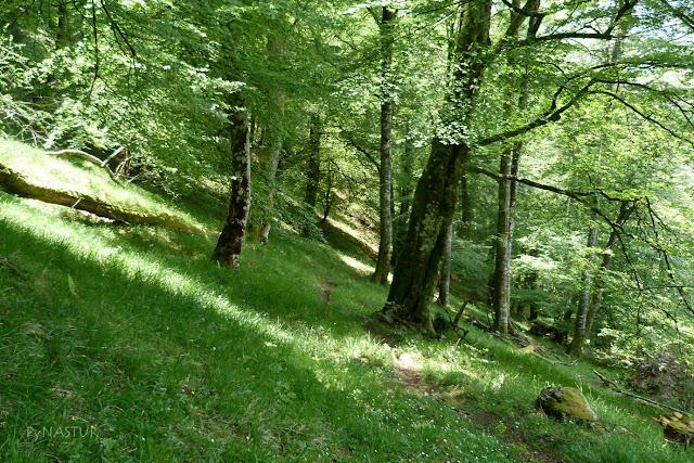 Hayedo de Luiña - Asturias